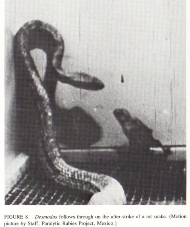 Vampire vs rat snake