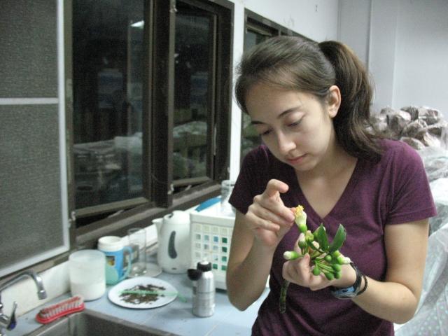 Alyssa prepares Ceiba flowers for her tests