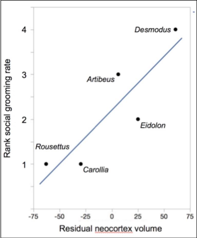 Neocortex: Does Neocortex Size Predict Social Grooming In Bats