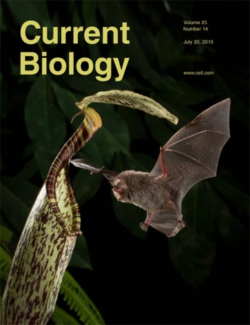 Schöner, M. G., Schöner, C. R., Simon, R., Grafe, T. U., Puechmaille, S. J., Ji, L. L., & Kerth, G. (2015). Bats are acoustically attracted to mutualistic carnivorous plants. Current Biology, 25(14), 1911-1916.